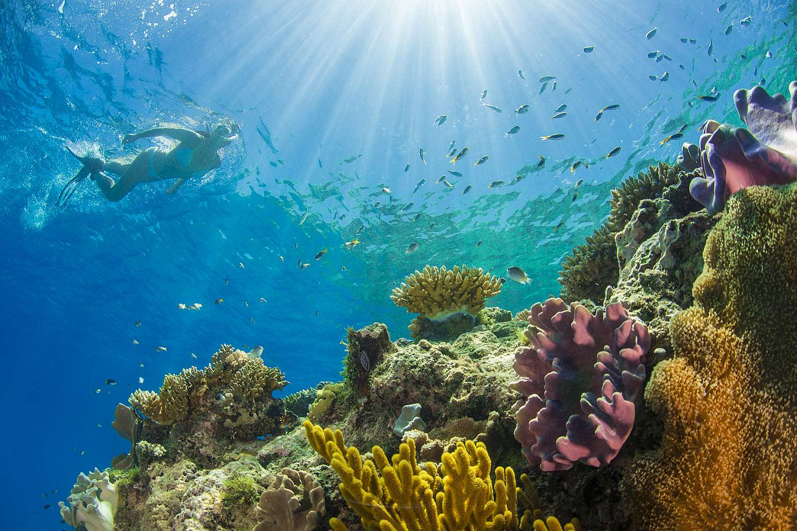 Image for Passions of Paradise - Snorkelling + Certified Dive